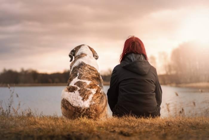 Ubezpieczenie psa – czy można to zrobić? Gdzie ubezpieczyć psa?